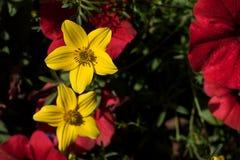 Härlig gul blomma på suddig bakgrund Royaltyfria Foton