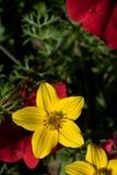 Härlig gul blomma på suddig bakgrund royaltyfri foto