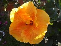 Härlig gul blommabild royaltyfria bilder