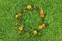 Härlig gul blommakrona (tusensköna) på nya vårgräsplangras Arkivbild