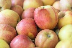 Härlig gul färg för nya mogna röda äpplen Arkivfoto