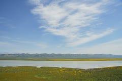 Härlig gul goldifeldsblomning med sodavatten sjön royaltyfri fotografi
