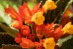 Härlig gul och orange blomma royaltyfria foton