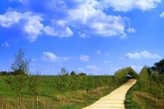Härlig gul sandgränd i bygd, grön äng på djupblå himmel med moln Royaltyfria Bilder