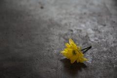 Härlig gul signal för mumblommatappning på det konkreta golvet royaltyfria foton