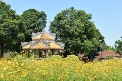 Härlig gul trädgård i Vietnam arkivfoton
