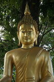 Härlig guld- Buddha Royaltyfri Foto