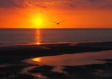 Härlig guld- glödande solnedgång som reflekterar på ett lugna hav med färgrika dramatiska moln och en seagull som ut flyger till  Arkivbild