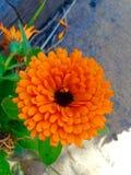 Härlig guld- orange blomma Arkivbild