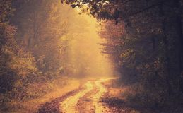 Härlig guld- skog om höstdagen arkivfoton