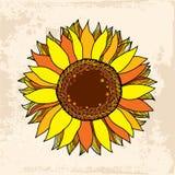 Härlig guld- solros för din design Stock Illustrationer