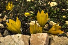 Härlig guling blommar att blomma i öppet fält royaltyfri fotografi