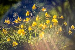Härlig guling blommar i trädgård royaltyfri bild