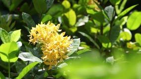 Härlig guling blommar i trädgården lager videofilmer