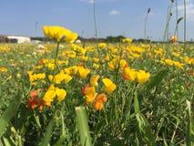 Härlig guling och röda blommor Arkivbild
