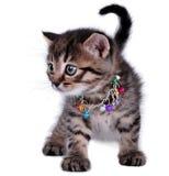 Härlig gullig en gammal kattunge för månad Royaltyfria Foton