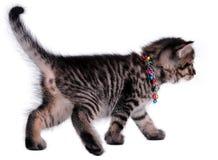Härlig gullig en gammal kattunge för månad Arkivbild