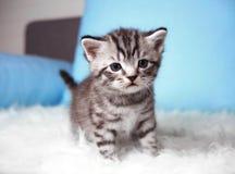 Härlig gullig kattunge royaltyfria foton