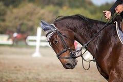 härlig häst arkivfoto