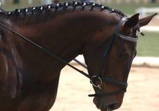 härlig häst Arkivbild
