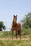 härlig häst Fotografering för Bildbyråer