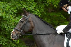 härlig häst Royaltyfria Bilder