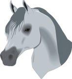 härlig häst för teckningshuvud Royaltyfri Fotografi