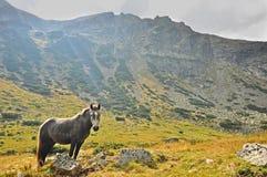 Härlig häst i berget Arkivbild