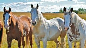 Härlig häst i deras paddock Arkivfoton