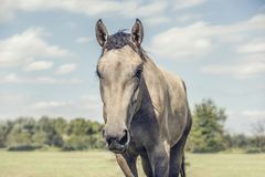 Härlig häst i fält med molnig himmel royaltyfria bilder