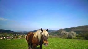 Härlig häst på betesmarken, solig vårdag stock video
