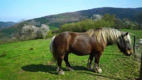 Härlig häst på betesmarken, solig vårdag arkivfilmer