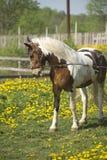 Härlig häst på en äng Arkivbild