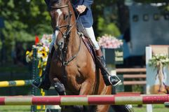 härlig hästbanhoppning Royaltyfria Bilder