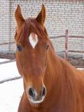 härlig häststående Arkivfoto
