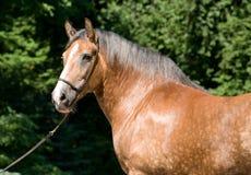 härlig häststående Royaltyfri Fotografi