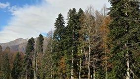 Härlig höst i bergen Royaltyfri Fotografi