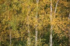 Härlig höstfärg i skog Arkivfoton