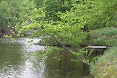 Härlig höstmorgon på sjön nära en färgrik orange skog Royaltyfria Bilder