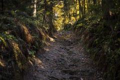 Härlig höstplats, färgrik skog i bergen Fotografering för Bildbyråer