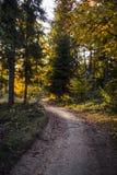 Härlig höstplats, färgrik skog i bergen Royaltyfria Foton