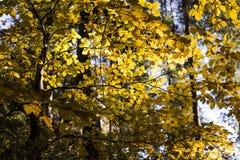 Härlig höstplats, färgrik skog i bergen Arkivbilder