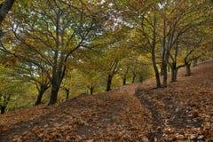 Härlig höstsäsong bland den kastanjebruna Genal dalen i Malaga Arkivfoto