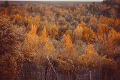 """Härlig höstskog i nationalparken """"De hoge Veluwe"""" i Nederländerna HDR Arkivbild"""