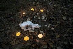 Härlig halloween sammansättning med runor, skallen, taroken och stearinljus på gräset i mörk höstskogritual Royaltyfri Foto