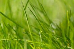 Härlig hellosummer för grönt gräs för sommar arkivfoto