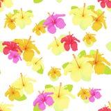 Härlig hibiskusblomma på vit Sömlös vektorillustration Royaltyfri Bild