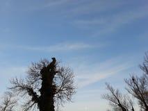 Härlig himmel i staden av Storkow royaltyfri foto