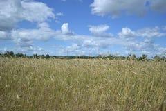 härlig himmel på ett gult fält arkivfoton