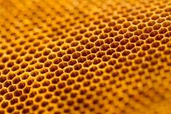 Härlig honungskaka utan honungtextur Fotografering för Bildbyråer